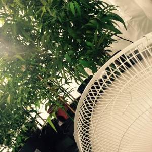 fan-and-plants